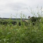 Blühstreifen am Feldrand